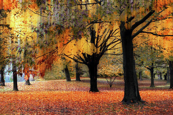 Photograph - Autumn Serenade by Jessica Jenney