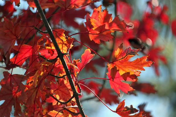 Seasonal Wall Art - Photograph - Autumn Series by Suzanne Gaff
