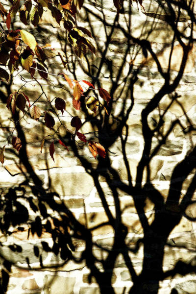 Photograph - Autumn Shadows by Cate Franklyn