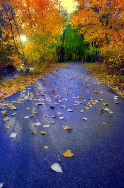 Photograph - Autumn Shadows by Tara Turner
