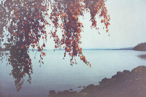 Photograph - Autumn Shore by Ari Salmela