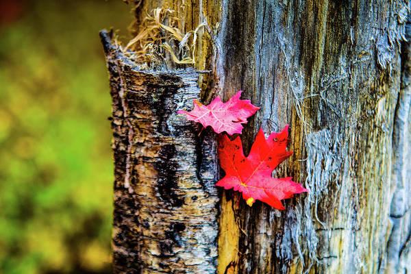 Photograph - Autumn Silence by Bryan Carter