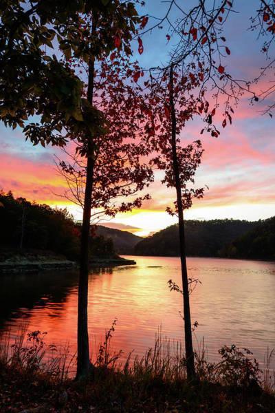 Photograph - Autumn Silhouette by Michael Scott