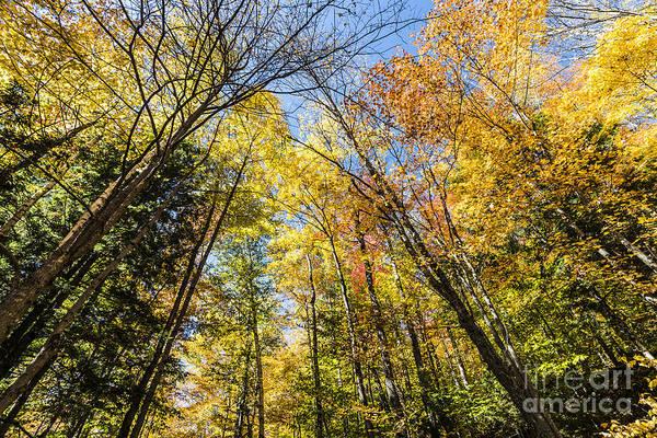 Photograph - Autumn Skies by Anthony Baatz