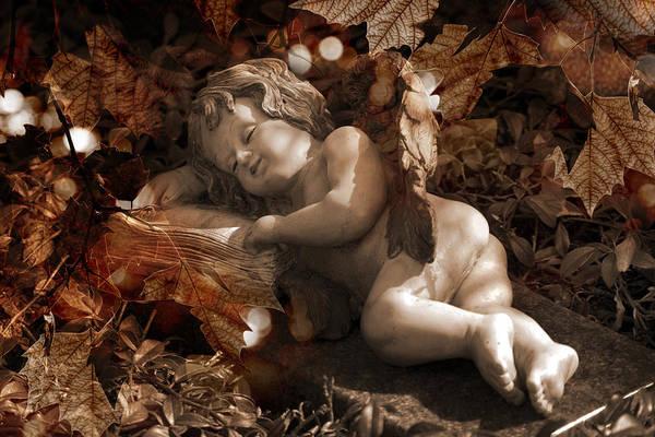 Photograph - Autumn Sleep by Marc Huebner