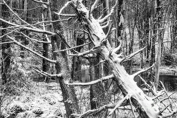 Photograph - Autumn Snow In Black And White by Thomas R Fletcher