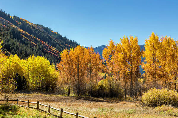 Photograph - Autumn Splendor In Aspen by Jemmy Archer