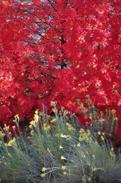 Autumn Splendor In Zion National Park Art Print