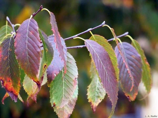 Photograph - Autumn Splendor by Lauren Radke