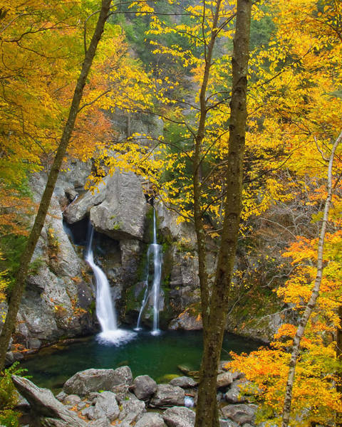 Photograph - Autumn Splendor by Neil Shapiro