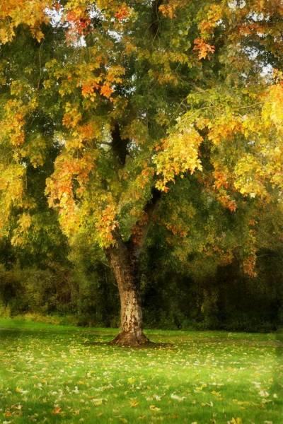 Photograph - Autumn Splendor by Patricia Strand