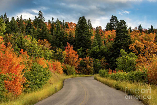 Photograph - Autumn - Squaw Peak Road - Cascade Meadow by Gary Whitton