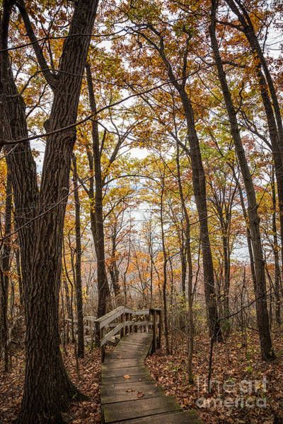 Photograph - Autumn Steps John Latsch State Park by Kari Yearous