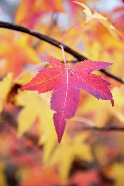 Wall Art - Photograph - Autumn Still by Karol Livote