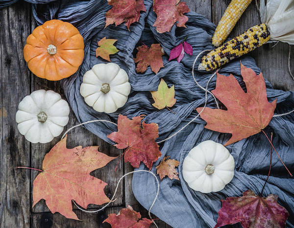 Photograph - Autumn Still Life by Kim Hojnacki
