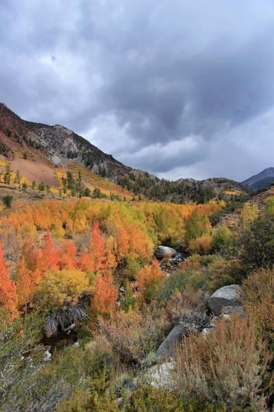 Photograph - Autumn Storm Portrait by Sean Sarsfield