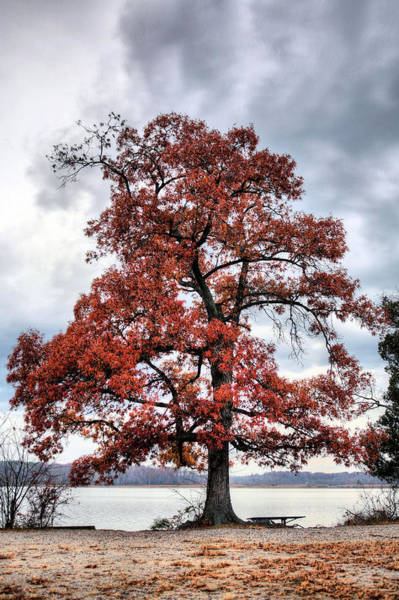 Photograph - Autumn Storms by JC Findley