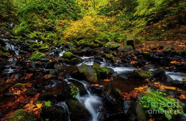 Wall Art - Photograph - Autumn Streams by Mike Dawson