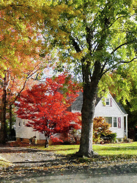 Photograph - Autumn Street With Red Tree by Susan Savad
