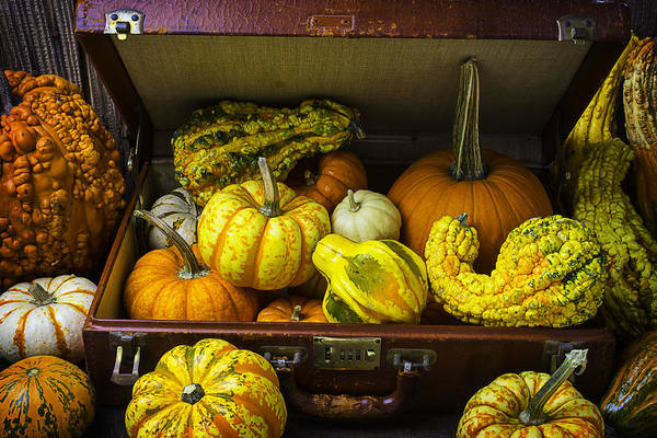 Gourd Photograph - Autumn Suitcase by Garry Gay