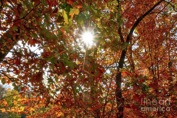 Wall Art - Photograph - Autumn Sun by DAC Photo