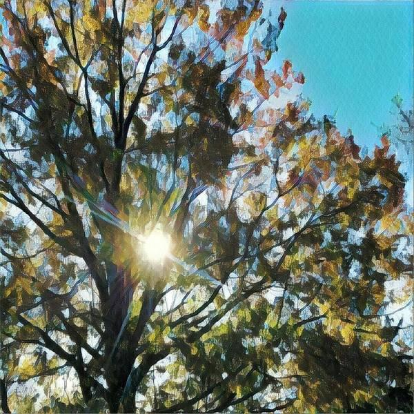 Photograph - Autumn Sun by Robert Knight