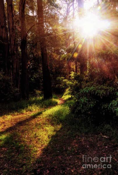 Wall Art - Photograph - Autumn Sunburst And Shadows By Kaye Menner by Kaye Menner