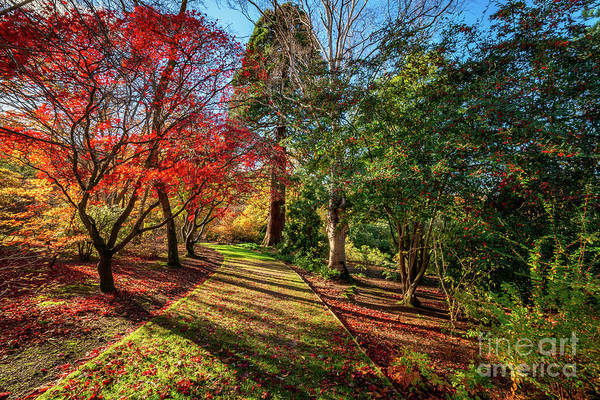 Wall Art - Photograph - Autumn Sunlight by Adrian Evans