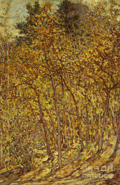 Thicket Wall Art - Painting - Autumn Sunlight by Robert Reid