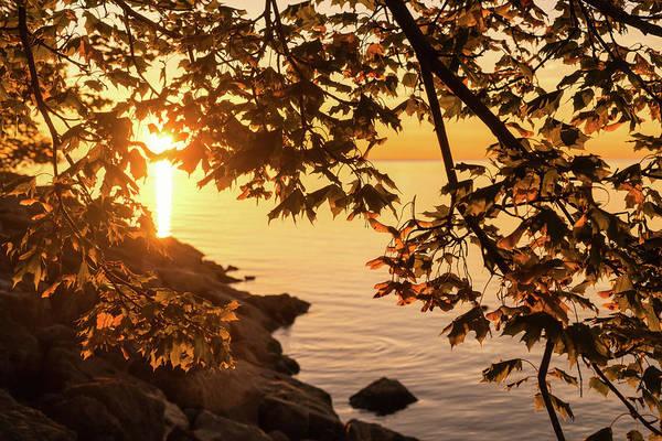 Photograph - Autumn Sunrise In Burnt Umber And Brushed Gold by Georgia Mizuleva