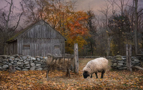 Photograph - Autumn Sweater by Robin-Lee Vieira
