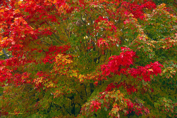 Photograph - Autumn Tapestry by Bruce Thompson