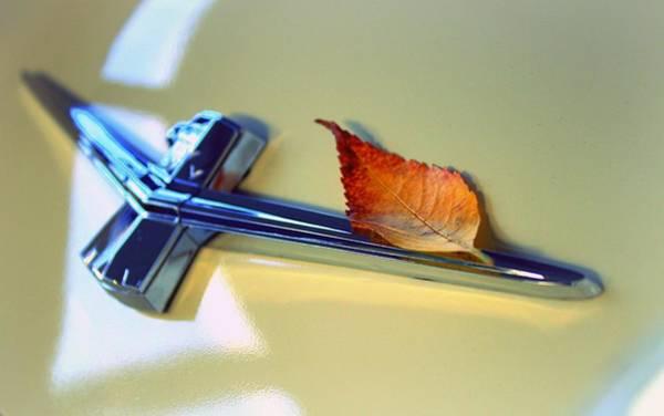 Wall Art - Photograph - Autumn Thunderbird by Joseph Skompski