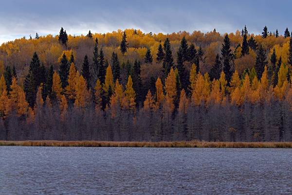 Waskesiu Photograph - Autumn Tiers by Larry Ricker