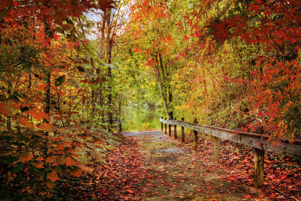 Photograph - Autumn Trail At Full Color by Debra and Dave Vanderlaan