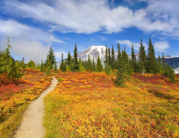 Alpine Meadows Photograph - Autumn Trail by Mike  Dawson