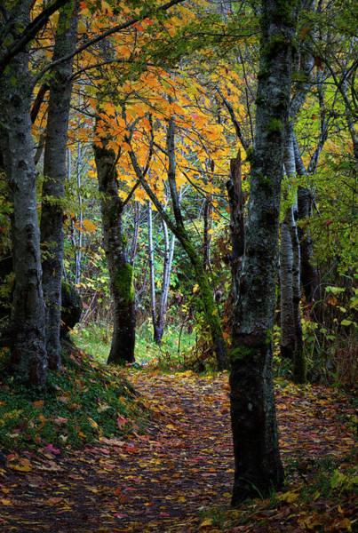 Photograph - Autumn Trail by Randy Hall