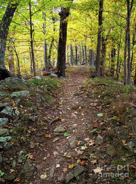 Photograph - Autumn Trail, Shenandoah National Park, Virginia  -94339 by John Bald