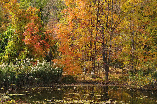 Photograph - Autumn Tranquility 2 by Frank Mari