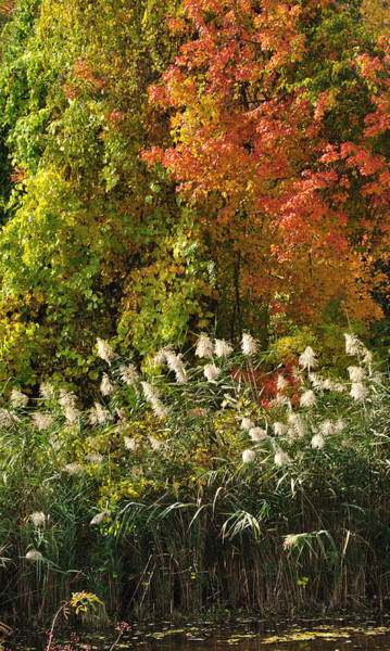 Photograph - Autumn Tranquility 3 by Frank Mari
