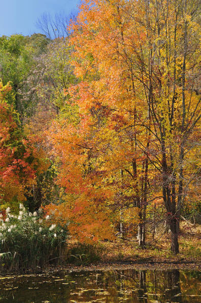 Photograph - Autumn Tranquility 4 by Frank Mari
