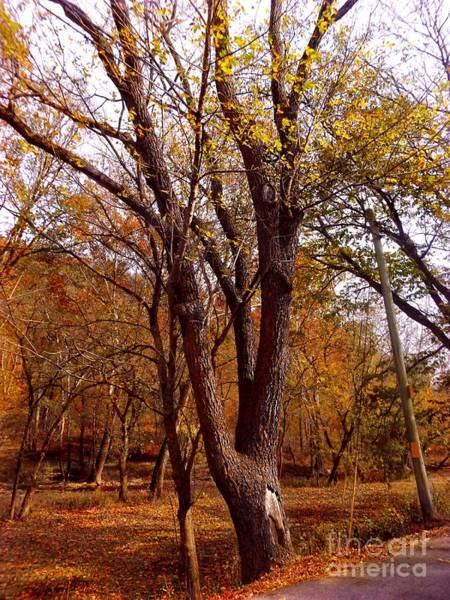 Photograph - Autumn Tree by David Neace