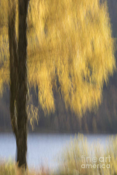 Photograph - Autumn Tree - Glen Affric by Karen Van Der Zijden