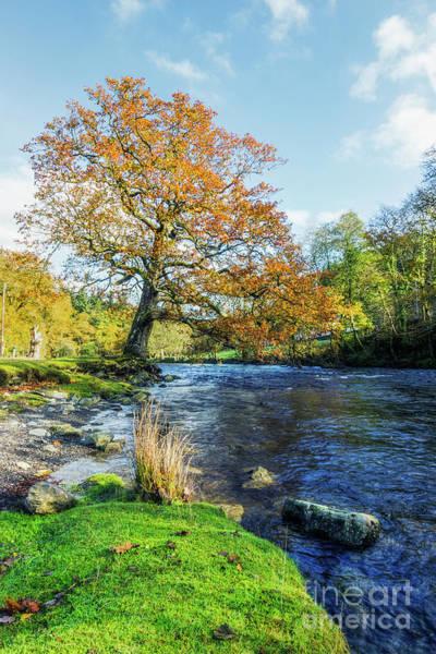 Photograph - Autumn Tree by Ian Mitchell