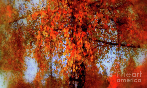 Photograph - Autumn Tree In Switzerland by Susanne Van Hulst