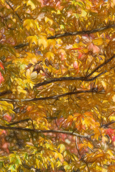 Photograph - Autumn Tree Leaves by David Letts