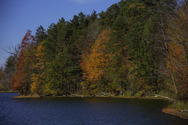 Photograph - Autumn Trees Along The Shore by Garry Gay