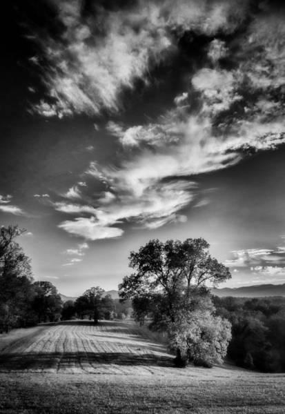 Photograph - Autumn Trees -bw by Joye Ardyn Durham