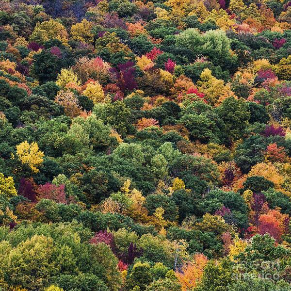 Rutland Photograph - Autumn Trees by John Greim