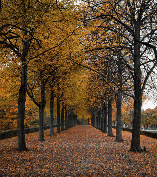 Wall Art - Photograph - Autumn Trees by Kyle Goetsch